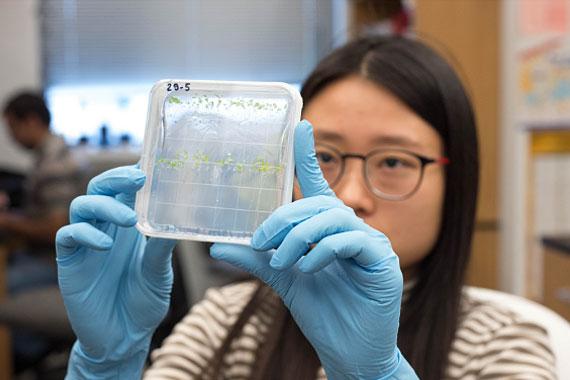 Student examining lab specimen