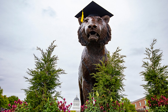 Tiger in Mortarboard