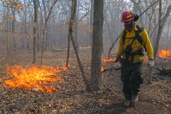 Researcher working with forest fire
